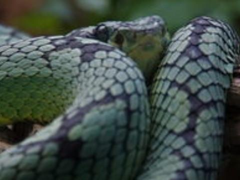 生肖属蛇的人一生运势怎么样?