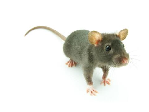 96鼠跟什么属相冲属相相克?