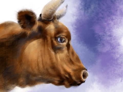 属牛适合跟哪个属性做生意要注意什么?