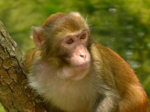 属猴人忌讳什么颜色和幸运色是什么?