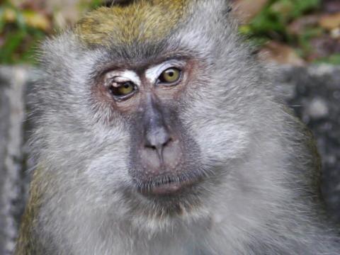 1992年属猴人2022年运势男性,92年30岁属猴男2022年每月运程怎么样