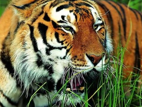 86年属虎最难的几年是什么时候?