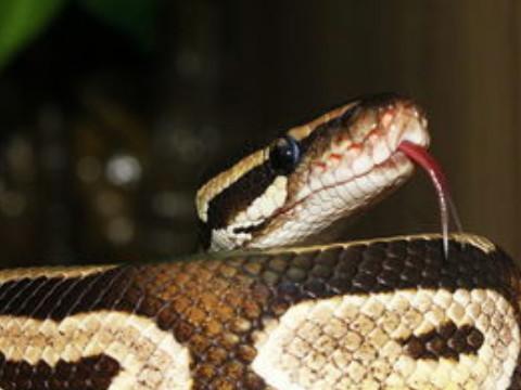 2001年属蛇的一生命运怎么样命好吗?