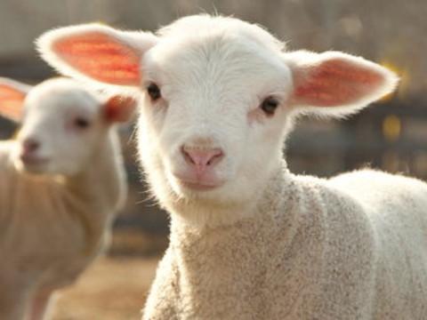 1991年属羊人2022年运势男性,91年31岁属羊男2022年每月运程怎么样