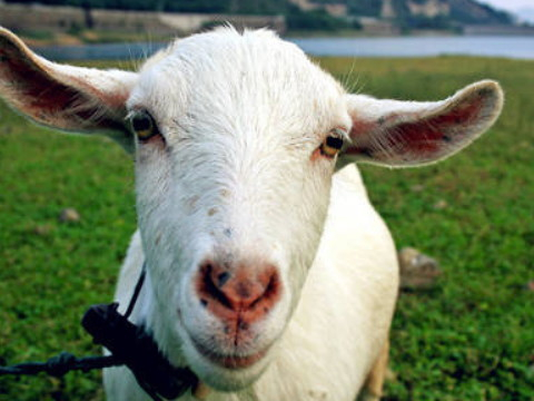 1991年属羊女一生有几个孩子有福气吗?