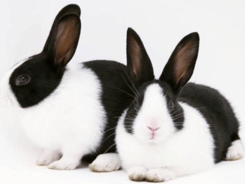 87属兔一生有几次婚姻状况 婚姻感情运势如何?