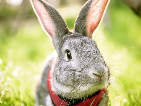 属兔的守护神是什么菩萨 佩戴什么合适?