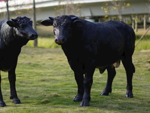 属牛的本命年穿什么颜色的衣服 又忌讳什么颜色?