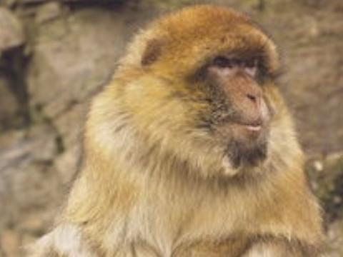 属猴的今年多大岁数 2022年属猴人命好吗?