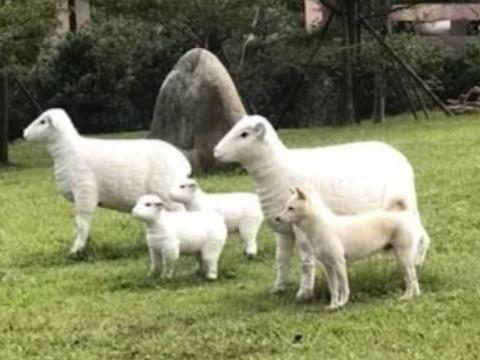 属羊是哪一年出生的什么命命好吗?