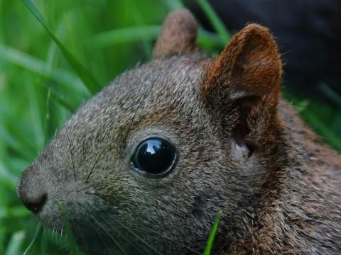 属鼠的人出生在什么时辰好能大富大贵?