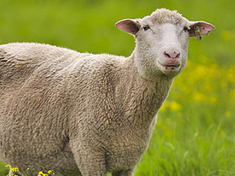 2003属羊男孩一生的命运 命好吗?