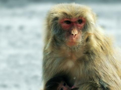 92年属猴女的最佳配偶 和什么属相相合?