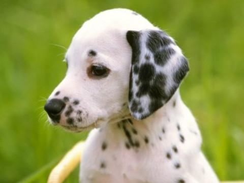 属狗人做什么生意最旺发财最快?