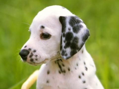 属狗的人一生运势怎么样能富贵吗?