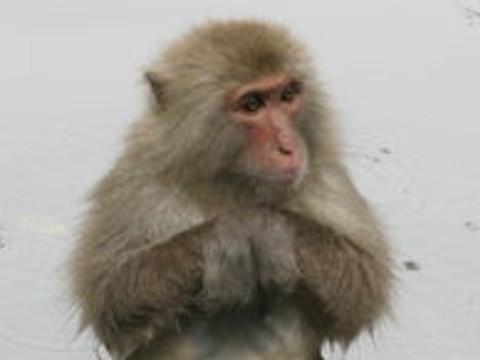 92年属猴的女人性格和脾气如何 命运怎么样?