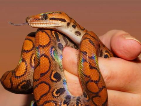 出生十一月的蛇命苦吗 一生命运如何?
