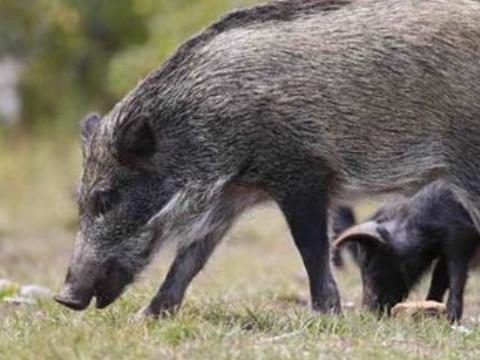 二月猪的婚姻状况如何财运怎么样?