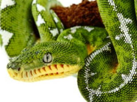 属蛇的今年多少岁 生肖蛇2022年运势如何?