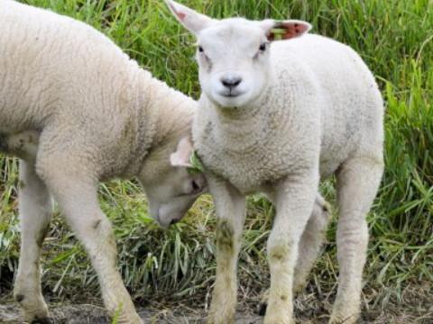 67年属羊女54岁后命运 会有坎坷大祸吗?