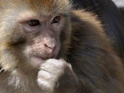 猴守护神本命佛是谁 适合什么吉祥物?
