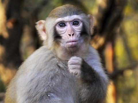 属猴的全部年龄表2022年多大?