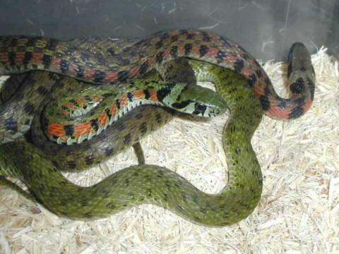 女的属蛇的和什么属相最合适 最佳婚配是谁?