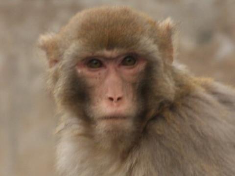 属猴56年一生晚年怎样 命好不好?