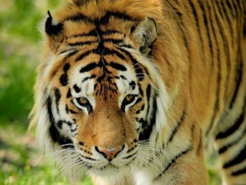 98年属虎人一生贵人是谁呢?