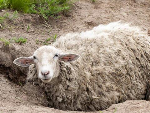 属羊的和什么属相相冲 怎么化解?