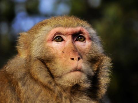 属猴的人适合佩戴什么吉祥物 如何旺运?