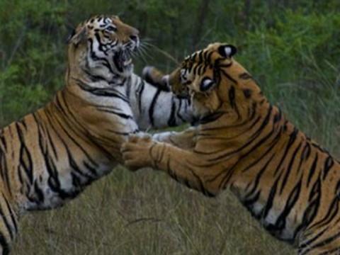 1998年属虎2022年结婚好吗?98年出生的24岁属虎的人可以结婚吗?