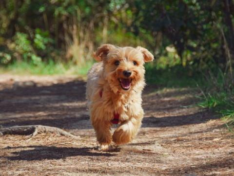 属狗的和什么属相最配 最佳婚配是谁?