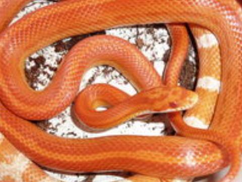 属蛇几月出生最好 命好财运旺?