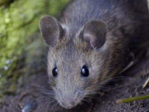 鼠宝宝出生在什么时辰命最好 能大富大贵?