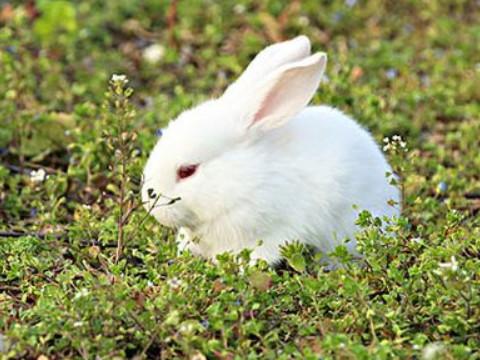 87年属兔人永久吉利的数字和颜色是什么?