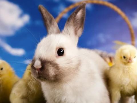 女兔几月出生最好 命好财运旺?