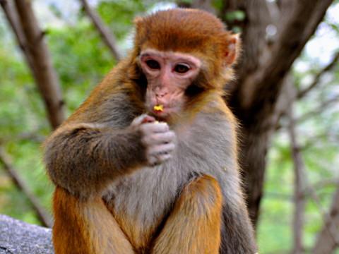 属猴的女人性格和脾气 命运运势怎么样?