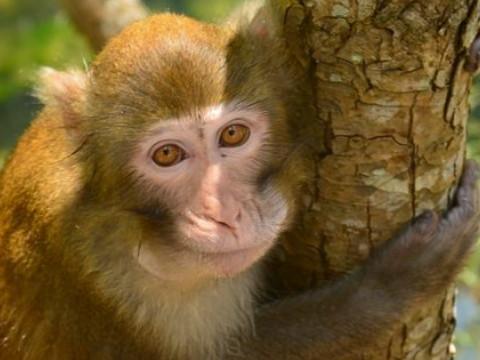 属猴人适合开什么店 做什么行业最合适?