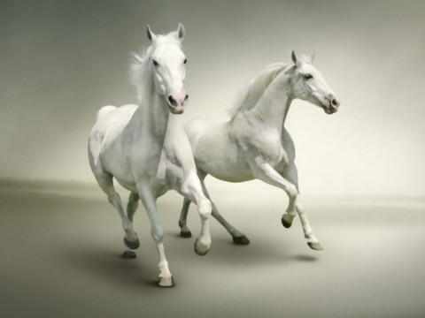 属马的寿命长吗能活多久 一辈子命运如何?