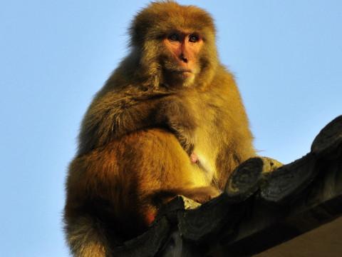 属猴的五大贵人是什么属相 一个都不能错过!