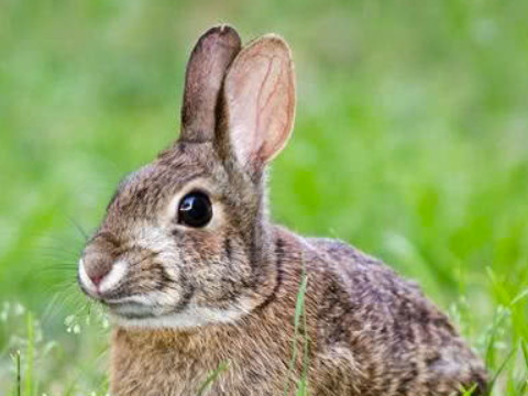 1975年属兔女2022年运势及运程,47岁属兔人2022全年每月运势女性如何