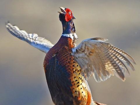属鸡的今年干什么最发财 适合什么行业?