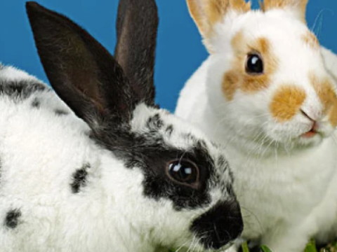 属兔的今年多大哪年出生的 2022年运势怎么样?