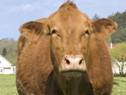 属牛的犯冲属相是谁 与谁属相相冲?
