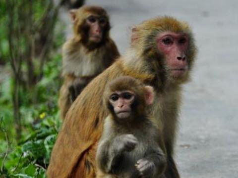 属猴的真命贵人是谁?和什么属相相合?