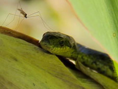 属蛇的和什么属相合作比较好 和什么人属相相合?