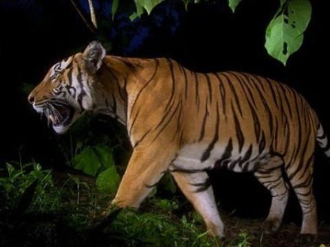 属虎的人1998出生今年几岁 命运如何?