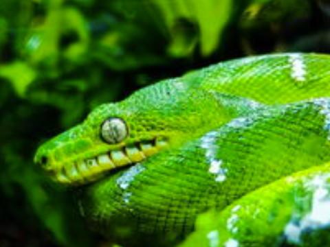 属蛇的女人性格和脾气好不好 感情运势怎么样?