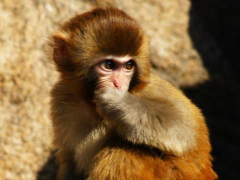 1980属猴男婚姻劫是什么时候 怎么化解?